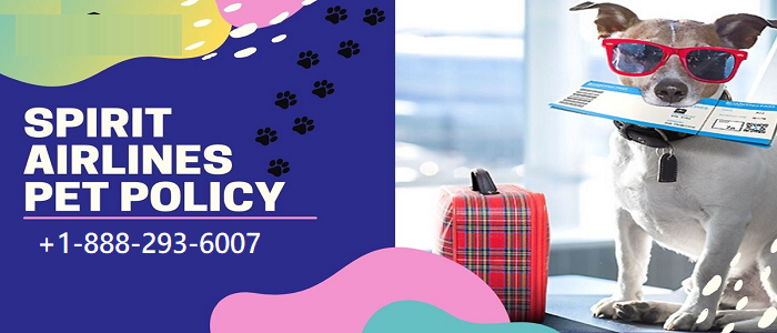 Spirit airlines pet policy